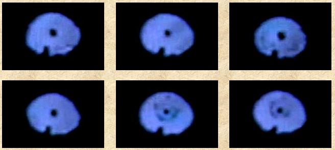 NASA UFOs ultraviolet critters